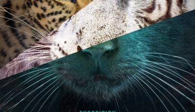 16037_066_parcours-decouverte-felins